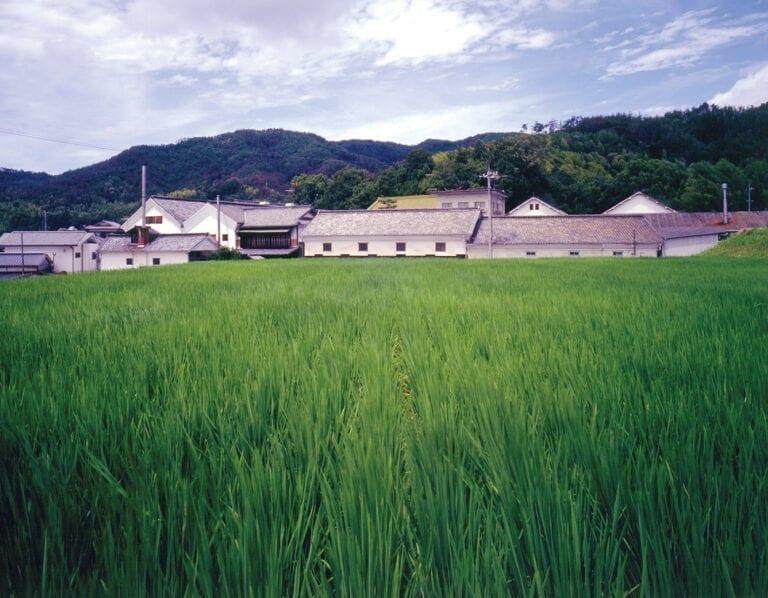 Summer at Marumoto Brewery