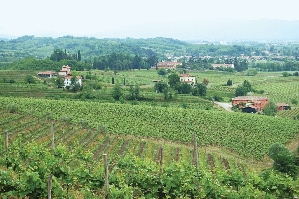 Pighin Collio estate and vineyards