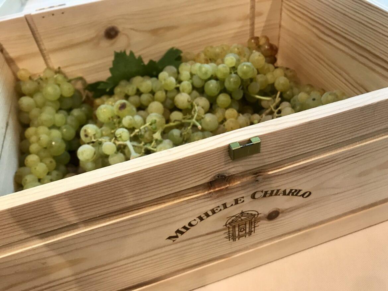 Michele Chiarlo Moscato grapes
