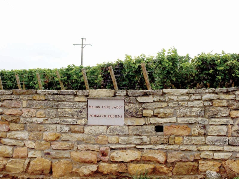 Vineyard Pommard, Burgundy, Louis Jadot, stone wall