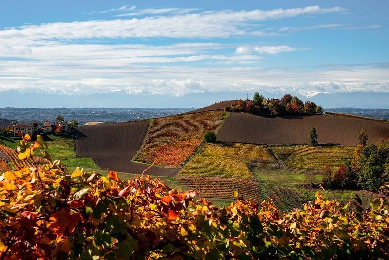 Autumn vineyards, Piedmont, Italy by Giacomo Faccio