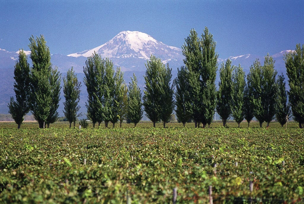Andes Mountains and Alta Vista vineyards