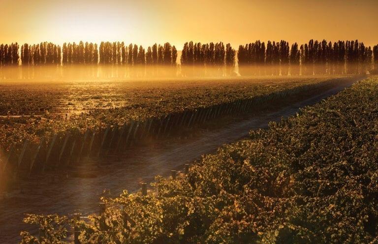 Mendoza, Argentina vineyards from Norton winery