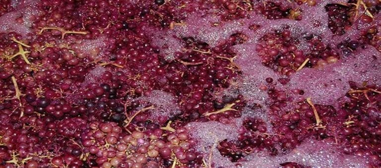 Carbonic maceration of red wine grapes