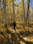 Hiking. Image by craig hellier, unsplash, fall autumn forest gold leaves