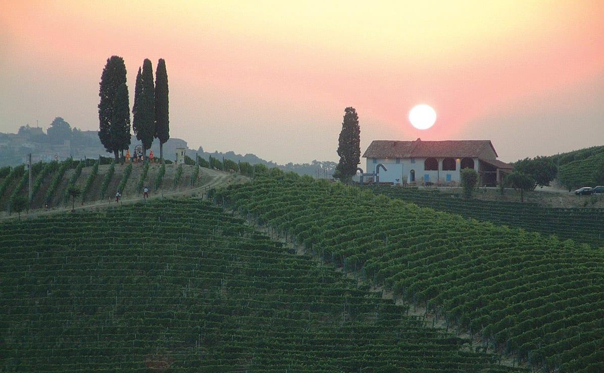 Michele Chiarlo, Sunrise, Vineyard, Sunset