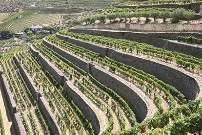 Terraced vineyards in Portugal - Taylor Fladgate