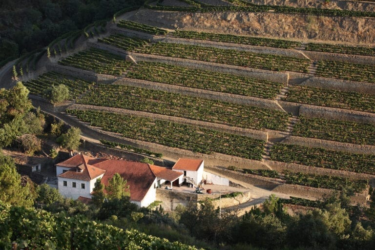 Taylor Fladgate vineyards in Portugal, Douro River Valley, Porto
