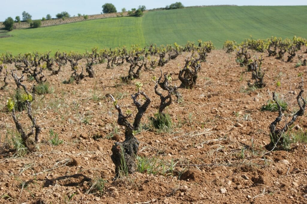 Soil Vineyard Dirt
