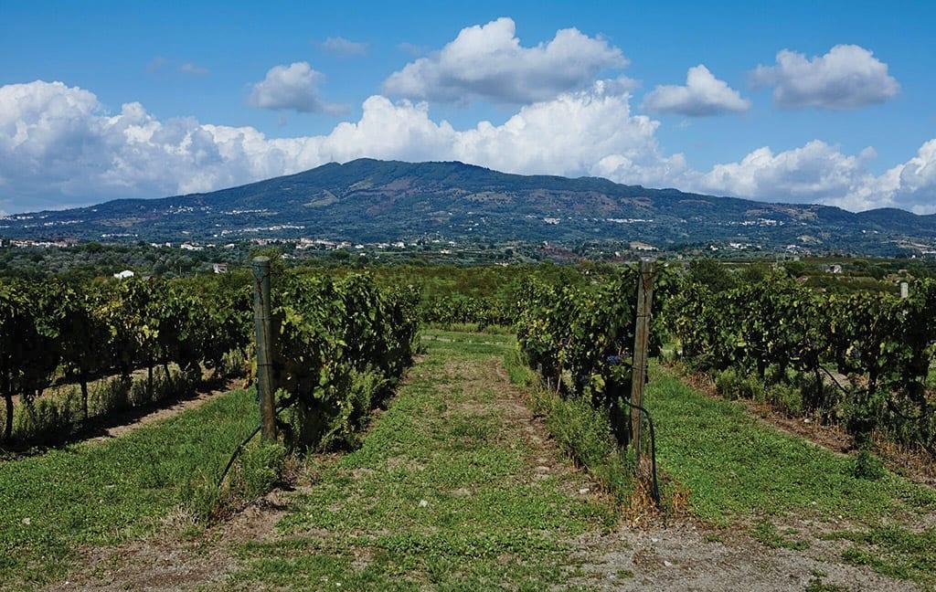 Roccamonfina, vineyards