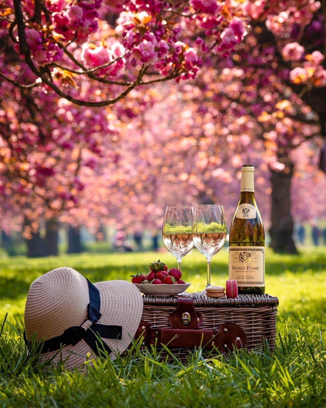 picnic, wine, paris, france